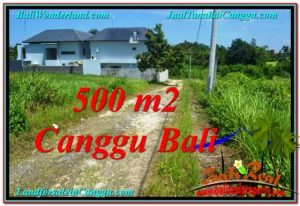 Beautiful 500 m2 LAND SALE IN CANGGU TJCG201