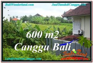 Exotic PROPERTY 600 m2 LAND IN CANGGU BALI FOR SALE TJCG206