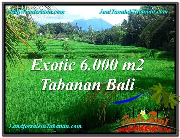 Affordable 6,000 m2 LAND IN Tabanan Penebel BALI FOR SALE TJTB306