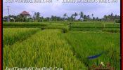 Beautiful PROPERTY 1,500 m2 LAND SALE IN Ubud Pejeng BALI TJUB541
