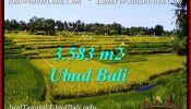 Affordable 3,583 m2 LAND FOR SALE IN Ubud Pejeng TJUB542