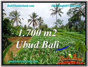 FOR SALE Exotic LAND IN Ubud Payangan BALI TJUB560