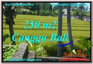 Affordable PROPERTY 250 m2 LAND FOR SALE IN CANGGU BALI TJCG207
