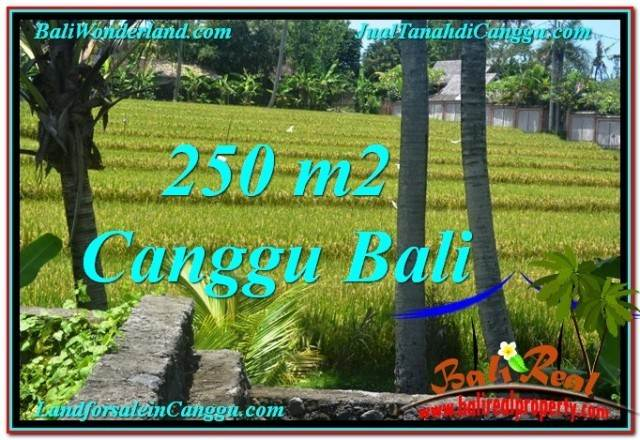 Affordable PROPERTY 250 m2 LAND IN Canggu Pererenan BALI FOR SALE TJCG207