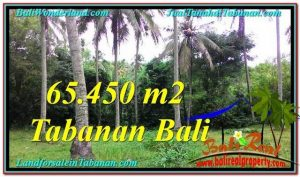 Magnificent LAND SALE IN Tabanan Selemadeg BALI TJTB290