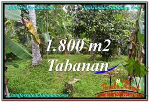 Magnificent PROPERTY LAND IN TABANAN FOR SALE TJTB293
