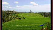 Magnificent PROPERTY 45,000 m2 LAND SALE IN Ubud Payangan TJUB533