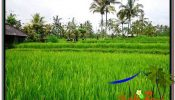 Beautiful UBUD LAND FOR SALE TJUB559