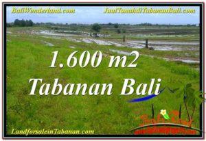 Exotic 1,600 m2 LAND IN Tabanan Selemadeg FOR SALE TJTB310