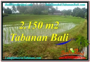 FOR SALE Magnificent PROPERTY LAND IN Tabanan Selemadeg TJTB312
