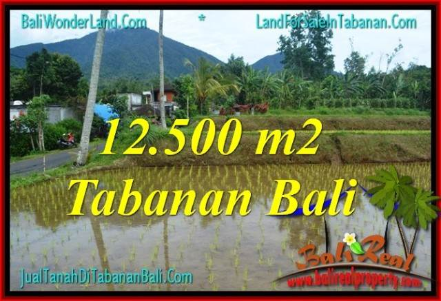 12,500 m2 LAND IN Tabanan Penebel BALI FOR SALE TJTB317