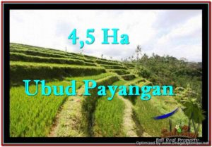 UBUD BALI 45,000 m2 LAND FOR SALE TJUB533