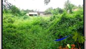 Magnificent 2,200 m2 LAND FOR SALE IN Sentral Ubud TJUB565