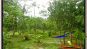 Beautiful 4,800 m2 LAND IN Ubud Payangan FOR SALE TJUB571