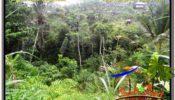 Exotic PROPERTY UBUD LAND FOR SALE TJUB572