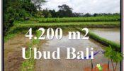 Affordable PROPERTY LAND SALE IN UBUD TJUB561