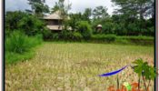 Affordable PROPERTY LAND FOR SALE IN UBUD TJUB562