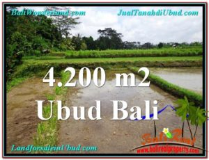 Beautiful 4,200 m2 LAND IN Ubud Tampak Siring FOR SALE TJUB561