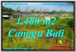 Exotic PROPERTY 1,480 m2 LAND SALE IN CANGGU TJCG212
