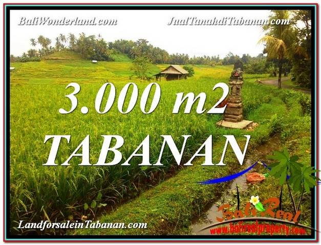 Magnificent PROPERTY 3,000 m2 LAND SALE IN Tabanan Selemadeg BALI TJTB328