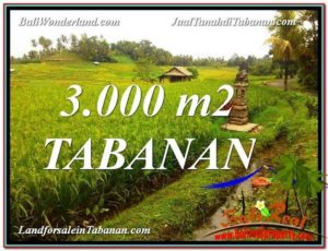 Magnificent 3,000 m2 LAND FOR SALE IN Tabanan Selemadeg TJTB328