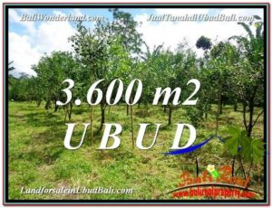 3,600 m2 LAND IN UBUD BALI FOR SALE TJUB599