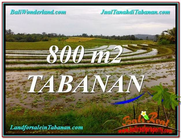 Magnificent 800 m2 LAND IN Tabanan Selemadeg BALI FOR SALE TJTB324
