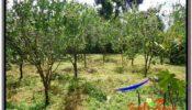 FOR SALE Affordable PROPERTY LAND IN UBUD TJUB599