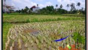 Exotic 2,000 m2 LAND IN UBUD BALI FOR SALE TJUB580