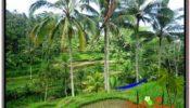 Beautiful PROPERTY Ubud Tegalalang 13,800 m2 LAND FOR SALE TJUB590