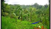 Affordable LAND FOR SALE IN UBUD TJUB591