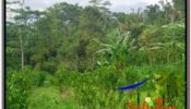 Exotic UBUD BALI 2,800 m2 LAND FOR SALE TJUB592