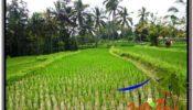 Affordable LAND SALE IN Ubud Tegalalang BALI TJUB594