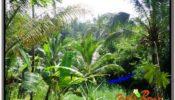 Beautiful LAND SALE IN UBUD TJUB597