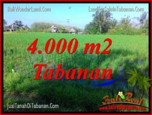 Beautiful PROPERTY LAND FOR SALE IN Tabanan Selemadeg BALI TJTB352