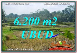Exotic 6,200 m2 LAND SALE IN UBUD BALI TJUB631