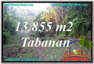 Exotic PROPERTY LAND IN TABANAN BALI FOR SALE TJTB335