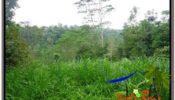Magnificent LAND SALE IN Ubud Tampak Siring BALI TJUB602