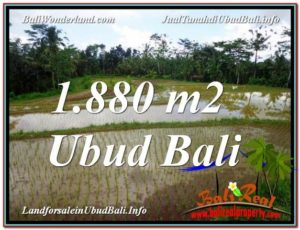 Magnificent PROPERTY LAND SALE IN UBUD TJUB613