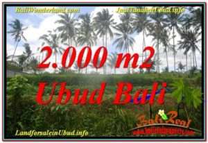FOR SALE Beautiful 2,000 m2 LAND IN UBUD BALI TJUB625