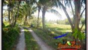 Affordable 1,500 m2 LAND FOR SALE IN UBUD BALI TJUB630