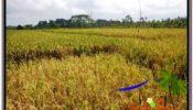 Beautiful PROPERTY 2,150 m2 LAND SALE IN UBUD BALI TJUB606
