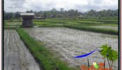 FOR SALE Beautiful PROPERTY 600 m2 LAND IN Ubud Tegalalang TJUB607