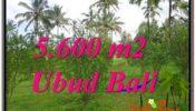 FOR SALE LAND IN Ubud Tegalalang BALI TJUB609