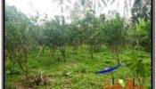 Beautiful 1,000 m2 LAND SALE IN UBUD BALI TJUB614