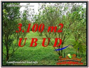 FOR SALE Affordable 3,100 m2 LAND IN UBUD BALI TJUB593