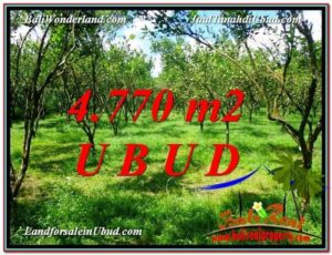 Magnificent 4,770 m2 LAND SALE IN UBUD BALI TJUB598