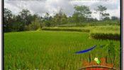 Beautiful PROPERTY LAND SALE IN UBUD TJUB624