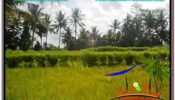 Affordable 400 m2 LAND SALE IN UBUD BALI TJUB627