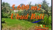 Affordable PROPERTY 5,600 m2 LAND SALE IN UBUD BALI TJUB636